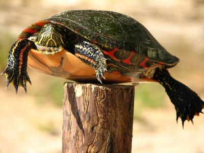 post_turtle_400